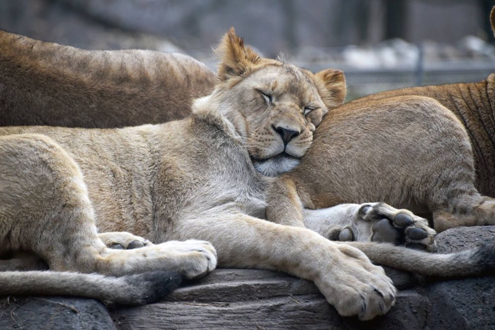 discount tickets + winter hours at the maryland zoo - (cool) progeny