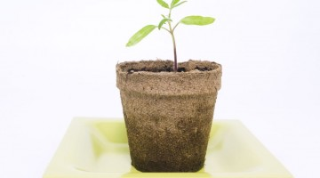 Easy Ways to Make Earth Day Every Day! - (cool) progeny
