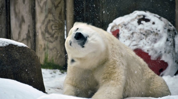 (cool) guide to maryland zoo in winter - (cool) progeny