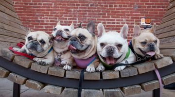 Dog Days of Summer Block Party with Creative Alliance