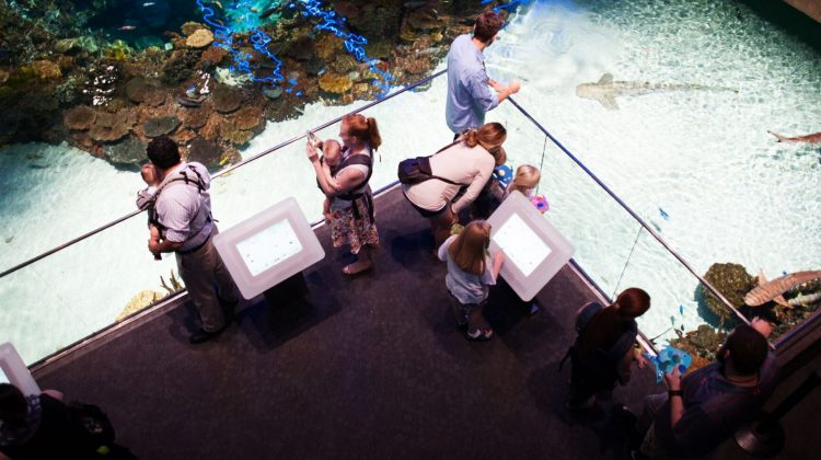 (cool) downtown family date night at the national aquarium - (cool) progeny