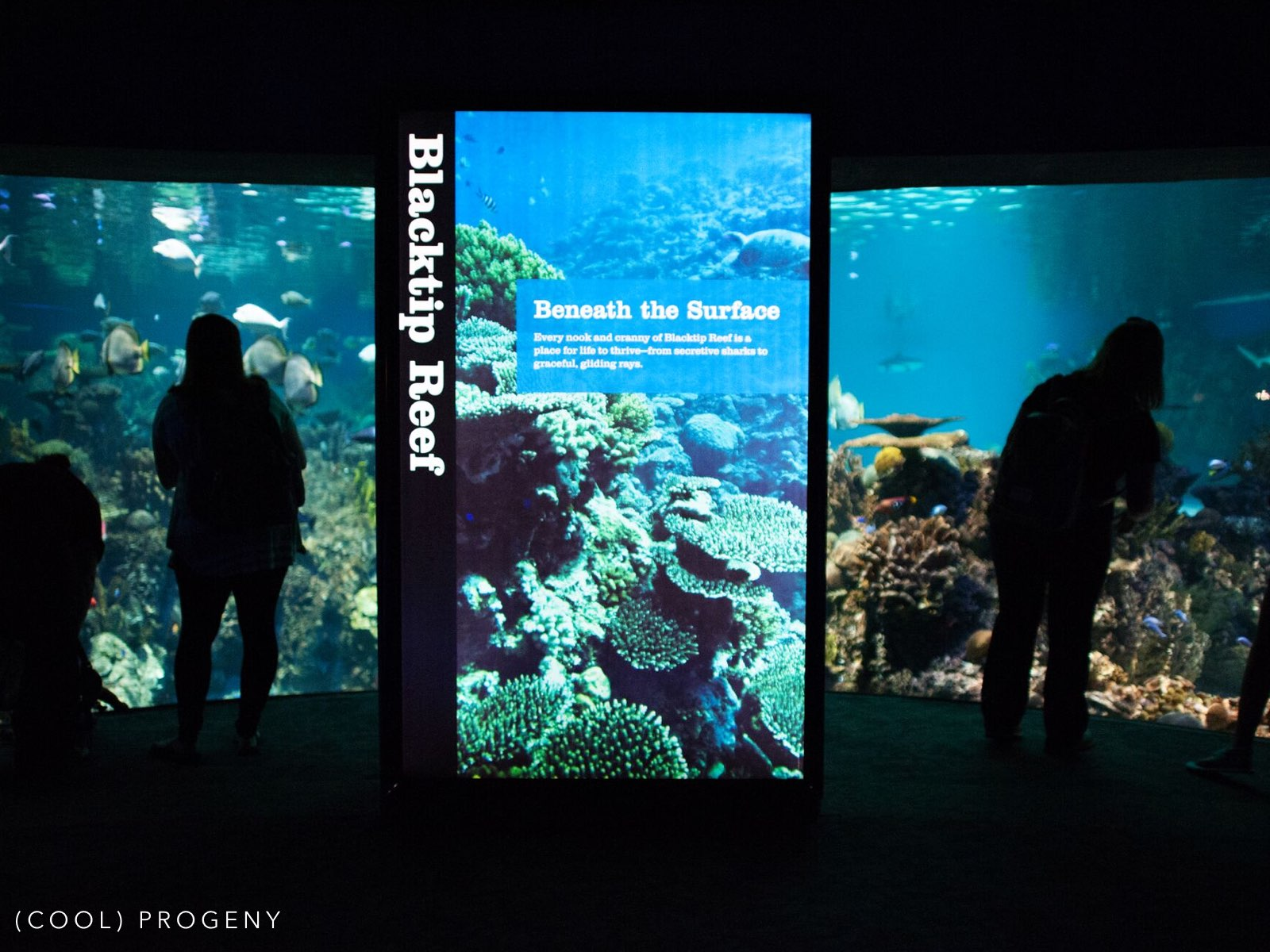 aquarium dating The weeknd and selena gomez went to toronto aquarium  from museum  trips to aquarium dates, these two know how to have fun.