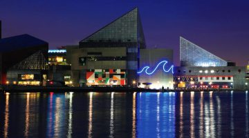 National Aquarium Pay What You Want Day - (cool) progeny