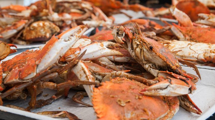 Chesapeake Crab and Beer Fest - (cool) progeny