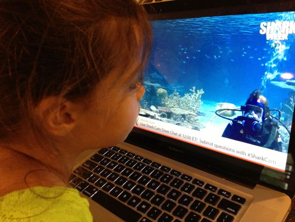 Shark Week Webcast from the National Aquarium - (cool) progeny