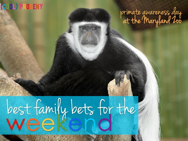 Best Family Events in Baltimore - August 16-18,2013