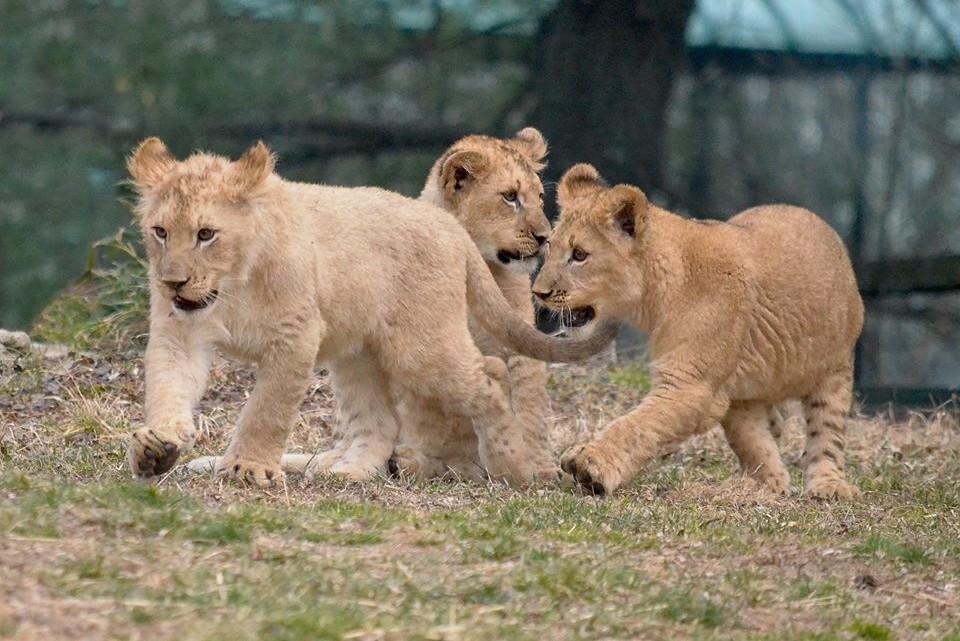 mayland zoo special advisory - (cool) progeny