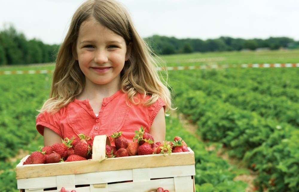 Maryland Pick Your Own Farms - (cool) progeny