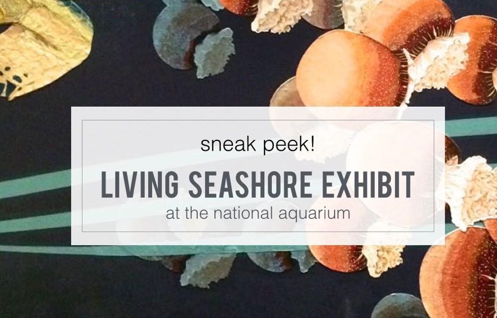 sneak peek! living seashore at the national aquarium - (cool) progeny #baltimore #baltimorekids #coolprogeny #nationalaquarium