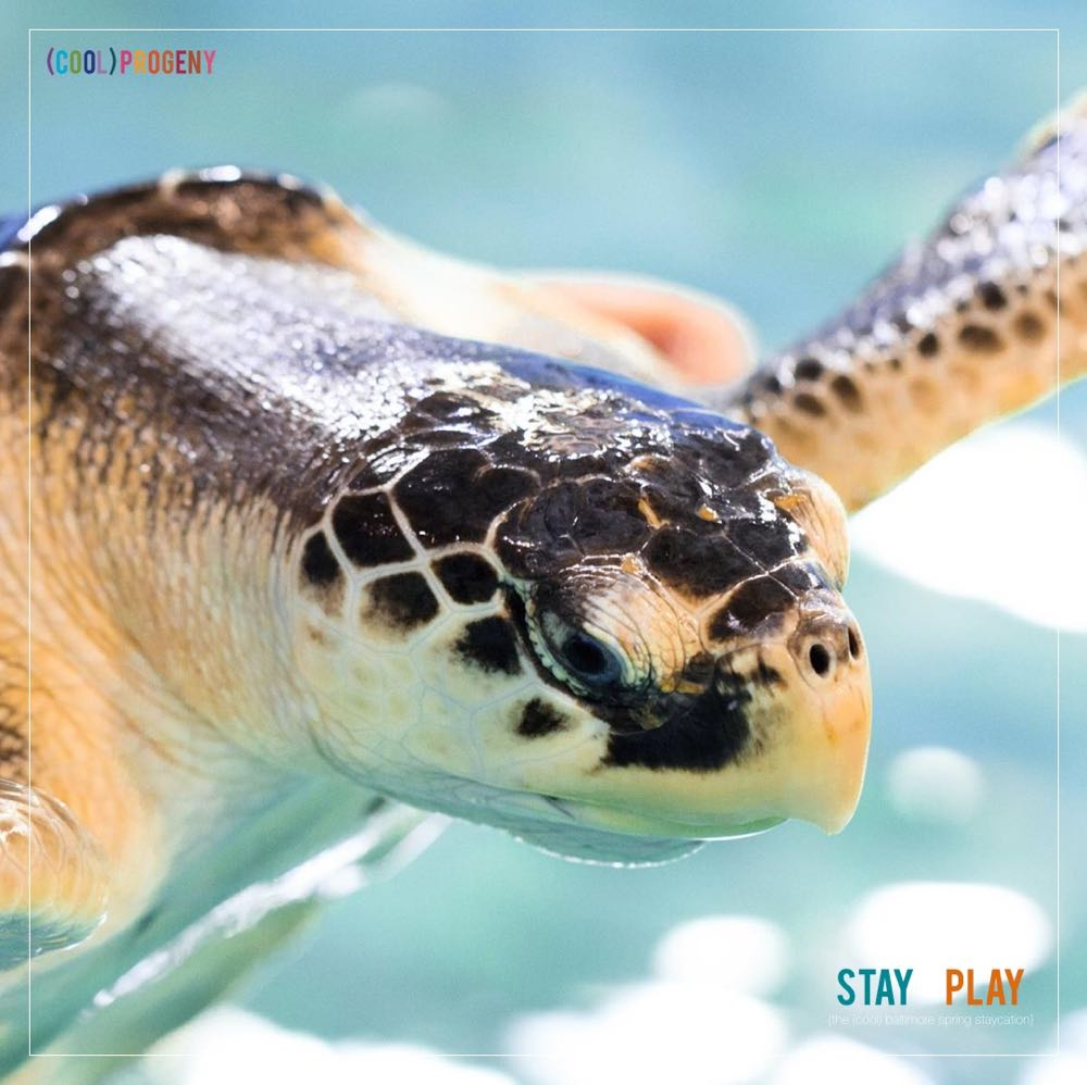 Stay + Play! Baltimore Spring Staycation: National Aquarium