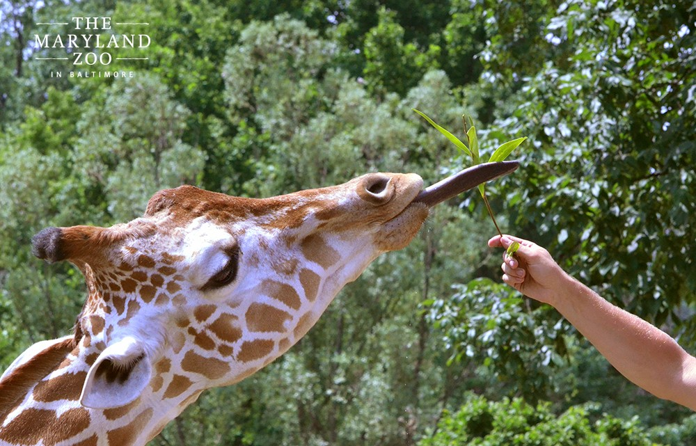 Baltimore Summer Camps Guide: Zoo Camp at the Maryland Zoo - (cool) progeny
