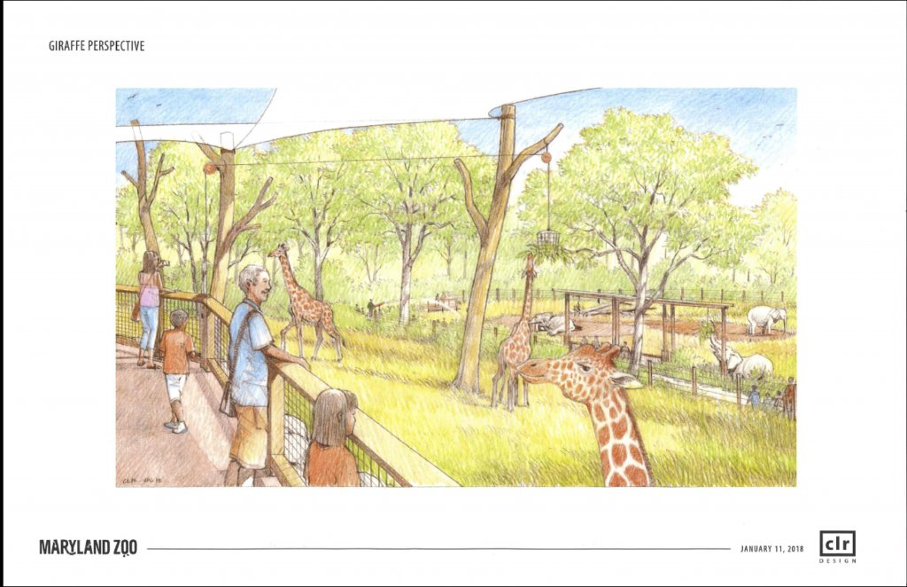 Sneak Peek At Maryland Zoo Renovations Cool Progeny