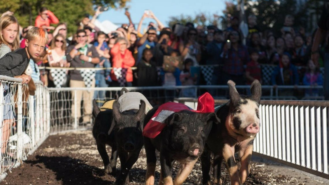 Pigtown Festival