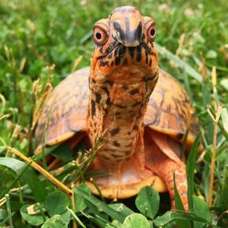 How to Green Your Birthday Party - Irvine Nature Center - (cool) progeny