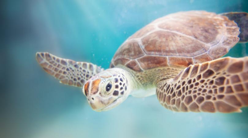 Aquarium World Oceans Day