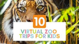 10 Virtual Zoo Trips for Kids