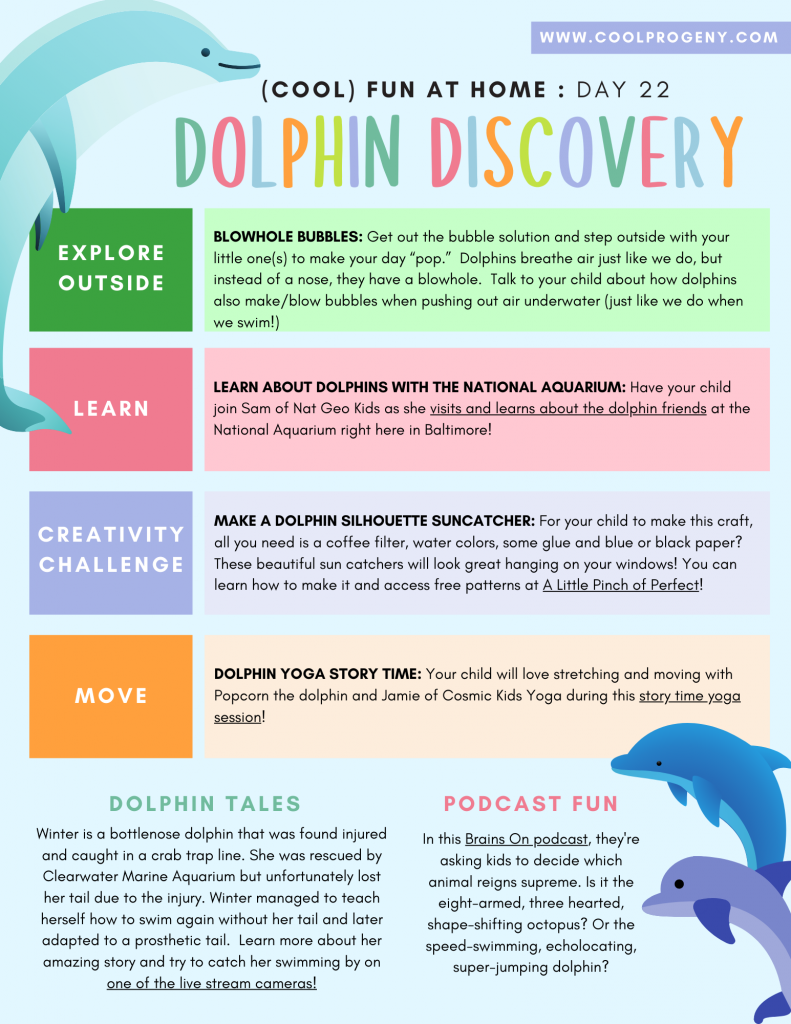 Cool Fun at Home: Dolphin Discovery