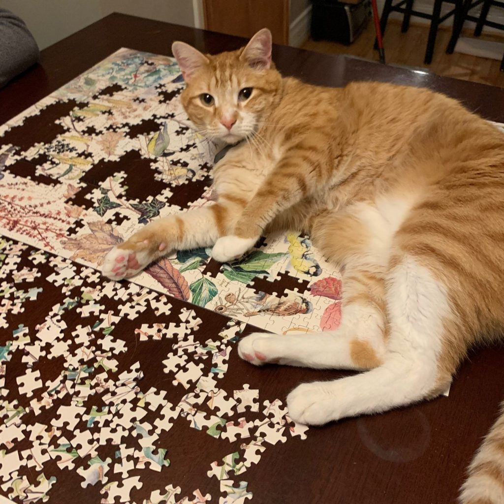 Puzzles: Photo by Dana Martin Scott