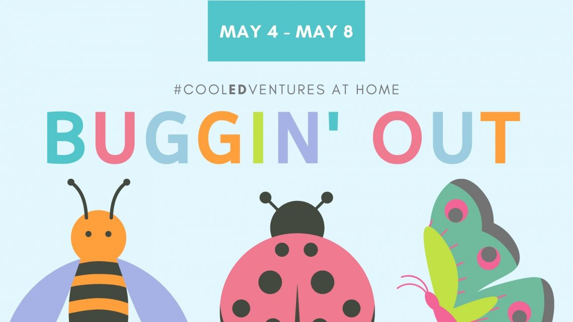 COOL EDVENTURES: Buggin' Out