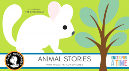 EDVENTURE | Wildlife Adventures