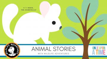 EDVENTURE | Wildlife Adventures