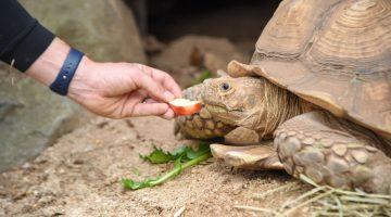 Animal Encounters - Maryland Zoo