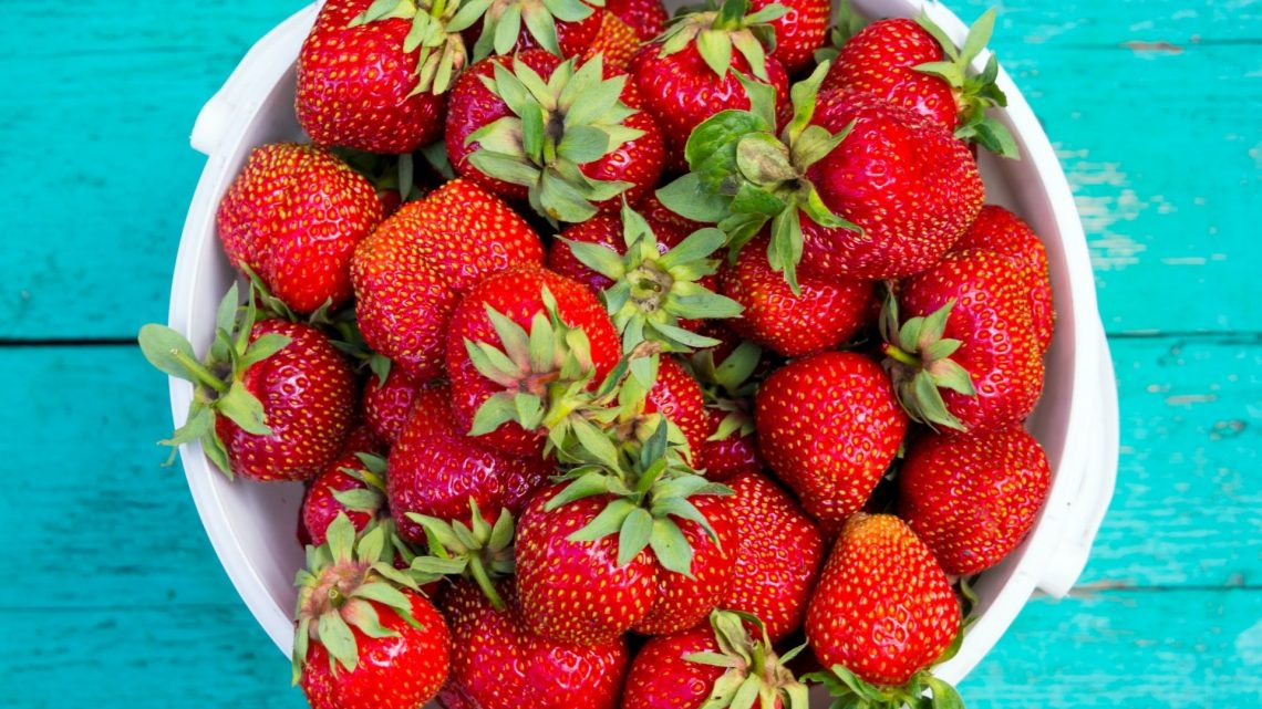 Where to Go Berry Picking with Kids Near Baltimore