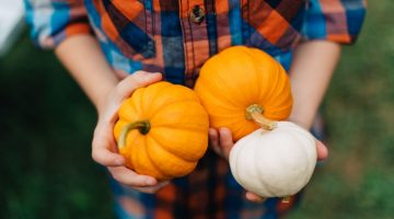 Pumpkin Patches in Baltimore